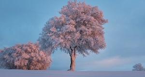 Je li sve u prirodi zaista tiše kada pada snijeg?